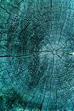 gammal avsnitttree för kors Bakgrund av träplankatexturväggen med utvald signalfärg Abstrakt bakgrund av ett gammalt uppvaktar Arkivbilder