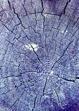 gammal avsnitttree för kors Bakgrund av träplankatexturväggen med utvald signalfärg Abstrakt bakgrund av ett gammalt uppvaktar Royaltyfri Fotografi