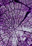 gammal avsnitttree för kors Bakgrund av träplankatexturväggen med utvald signalfärg Abstrakt bakgrund av ett gammalt uppvaktar Royaltyfri Foto