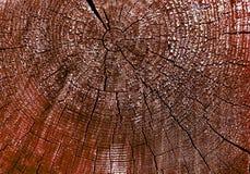gammal avsnitttree för kors Bakgrund av träplankatexturväggen med utvald signalfärg Abstrakt bakgrund av ett gammalt uppvaktar Arkivbild