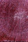 gammal avsnitttree för kors Bakgrund av träplankatexturväggen med utvald signalfärg Abstrakt bakgrund av ett gammalt uppvaktar Royaltyfria Foton