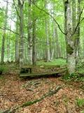 Gammal bänk i skog Fotografering för Bildbyråer