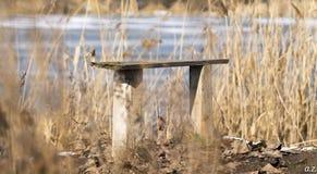 Gammal bänk på flodstranden Arkivfoton