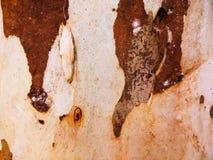 Gammal bakgrund för textur för kokospalmskäll arkivfoton