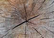 Gammal bakgrund för textur för trädstubbe Royaltyfria Bilder