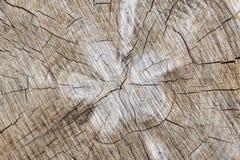 Gammal bakgrund för textur för trädstubbe Royaltyfri Bild
