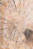 Gammal bakgrund för textur för trädstubbe Royaltyfri Foto