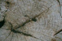 Gammal bakgrund för textur för trädstubbe Arkivbilder