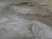 Gammal bakgrund & textur Arkivbilder