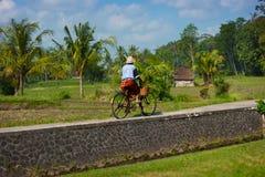 Gammal Balinesekvinna som cyklar förgångna risfält på henne cykel Arkivfoto