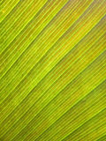Gammal bananbladmodell Royaltyfria Foton