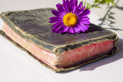 gammal bibelhelgedom Royaltyfria Bilder
