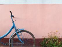 Gammal blåa cykel och blommor som är främsta av den rosa väggen royaltyfria foton