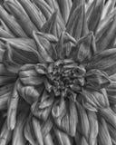 gammal blomma royaltyfri foto