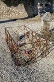Gammal blommig grav i en liten solig kyrkogård royaltyfri fotografi