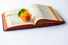 Gammal bok med den öppna sidor och rosen fotografering för bildbyråer
