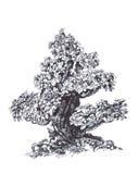 Gammal bonsai i vinden Arkivbild