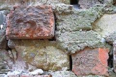 Gammal Brickwork red med den vita skarven Röd och vit silikattegelsten Smula tegelsten ibland arkivfoto