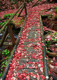 Gammal bro i skogen Arkivfoton