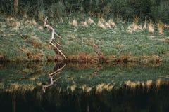 Gammal bruten trädfilial och dess reflexion i floden royaltyfri fotografi
