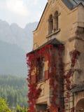 Gammal byggande fasad med den röda vinrankan royaltyfri foto