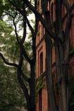 Gammal byggnad med tegelstenfasaden med träd royaltyfria foton