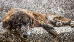 Gammal byracka som utomhus sover i en stenbänk En ledsen och hög tillfällig hund som överges i gatorna arkivfoto