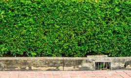 Gammal cementram Royaltyfria Foton
