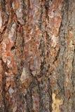 Gammal closeup för textur för trädskäll Arkivbilder