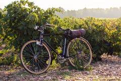 Gammal cykel i en vingård, på guld- soluppgång i Fontanars dels Alforins, liten stad i landskapet av Valencia, Spanien royaltyfria bilder