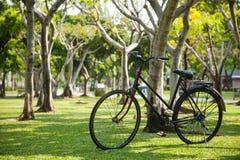 Gammal cykel i parkera. Arkivbild