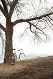 Gammal cykel nära trädet Royaltyfri Bild