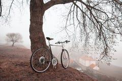 Gammal cykel nära trädet Royaltyfria Bilder