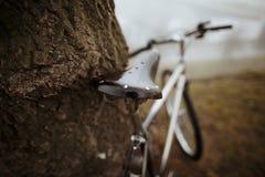 Gammal cykel nära trädet Royaltyfri Foto
