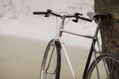 Gammal cykel nära trädet Royaltyfri Fotografi