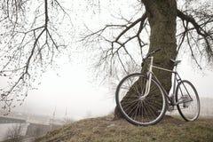 Gammal cykel nära trädet Arkivbilder