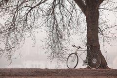 Gammal cykel nära trädet Arkivfoto