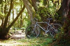 Gammal cykel parkerat vila mot ett träd royaltyfria foton