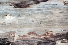 Gammal död textur för skogträd utan skäll, med många spår av tid - sprickor Närbildtillfångatagande som är användbart som en bakg arkivbilder