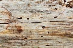 Gammal död trädtexturbakgrund royaltyfri foto