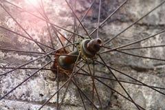 Gammal eker för cykelhjul arkivfoto
