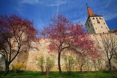 gammal fästning Royaltyfri Foto