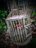 Gammal fågelbur Arkivbild