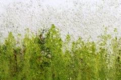 Gammal förstörd och nedfläckad grungy väggtextur Royaltyfri Bild