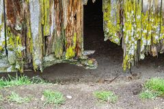 Gammal förstörd trädörr royaltyfri fotografi
