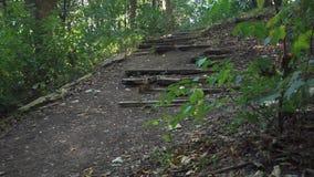 Gammal förstörd trappuppgång i skogen lager videofilmer