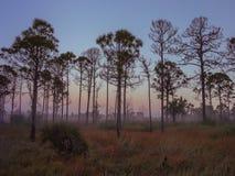 Gammal Florida soluppgång arkivfoto