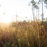 Gammal Florida soluppgång fotografering för bildbyråer