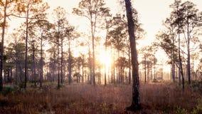 Gammal Florida soluppgång arkivbild