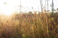 Gammal Florida soluppgång arkivfoton
